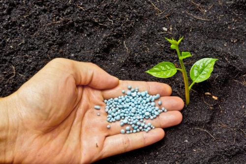 چگونه کود مناسبی برای گیاهان و محوطه باغ و باغچه انتخاب کنیم