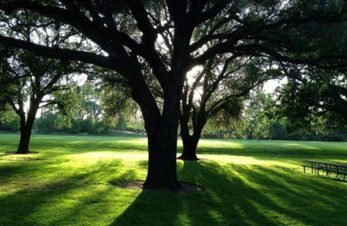 سایه در محوطه و فضای سبز