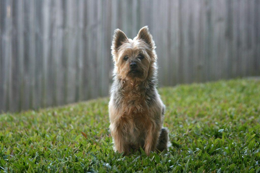 نگهداری سگ در فضای سبز و محوطه بیرونی